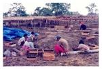Proyek Rehabilitasi Hutan Bantuan ITECF 1991-1992, Persemaian Akasia (3)
